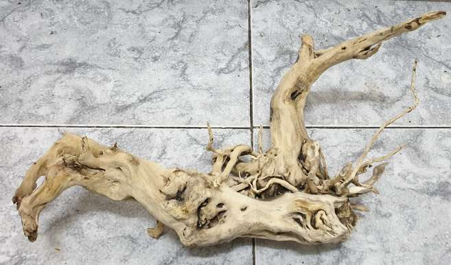 Imagen raíz mangle para acuario