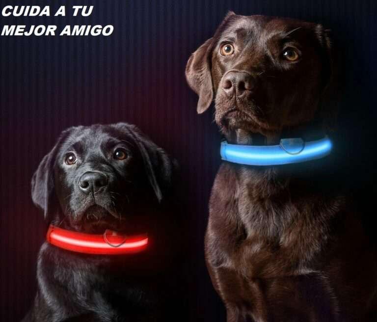 Imagen Collar Luz LED Mascotas