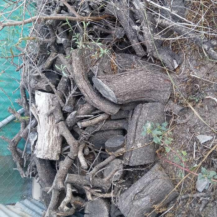Imagen se vende leña de almendro