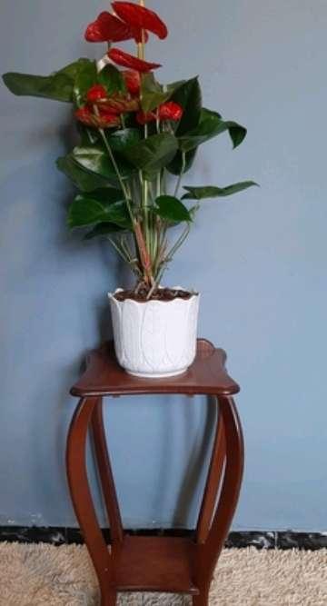 Imagen Macetero de madera nuevo