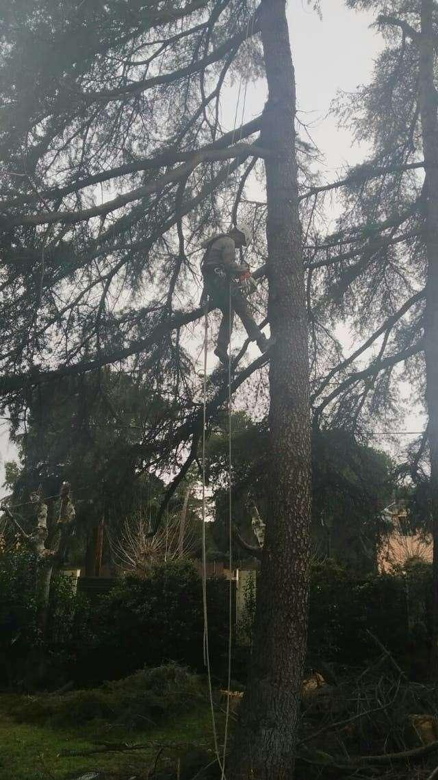 Imagen Podaala de árboles
