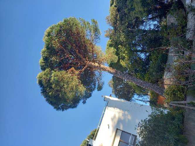 Imagen tala poda todo tipo de árboles peligrosos limpieza palmeras ?? limpieza parcelas y terrenos wasap 602 02 20 84