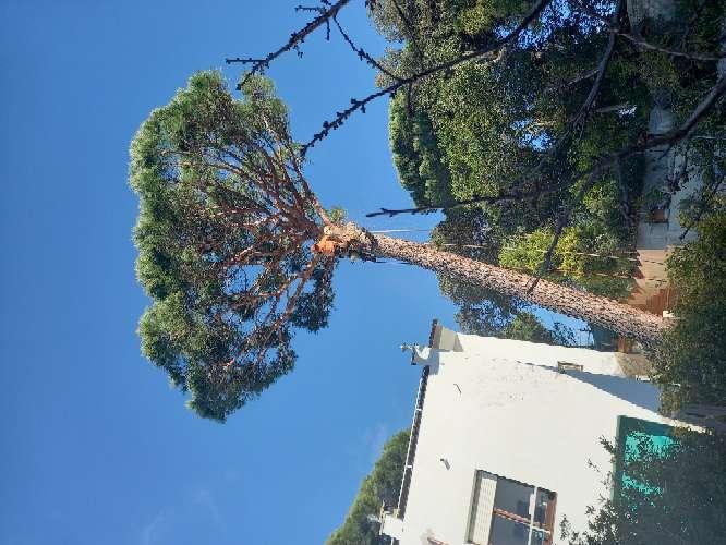 Imagen producto Tala poda todo tipo de árboles peligrosos limpieza palmeras ?? limpieza parcelas y terrenos wasap 602 02 20 84  2