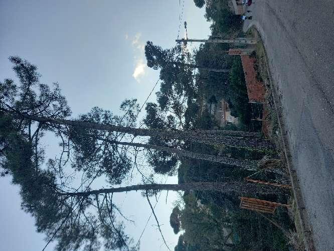 Imagen producto Tala poda todo tipo de árboles peligrosos limpieza palmeras ?? limpieza parcelas y terrenos wasap 602 02 20 84  4