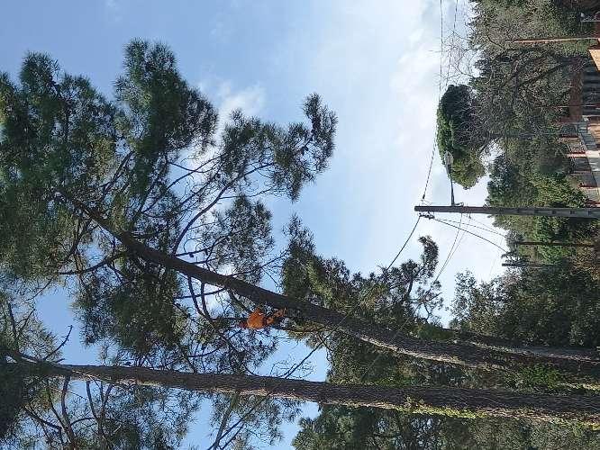 Imagen producto Tala poda todo tipo de árboles peligrosos limpieza palmeras ?? limpieza parcelas y terrenos wasap 602 02 20 84  3