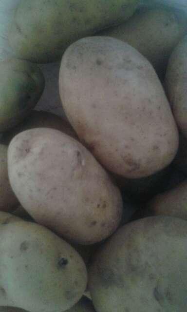 Imagen venta patata nueva