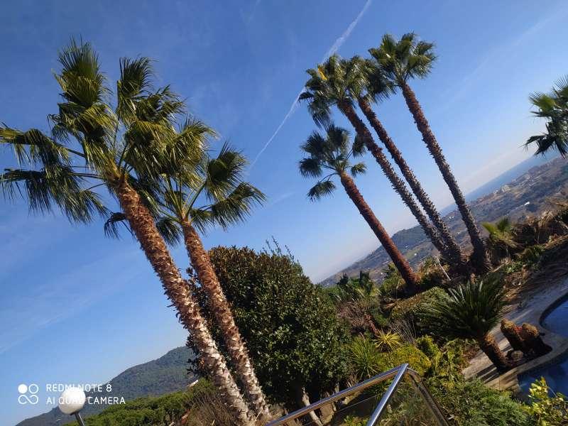 Imagen Poda de palmeras y árboles limpieza parcelas