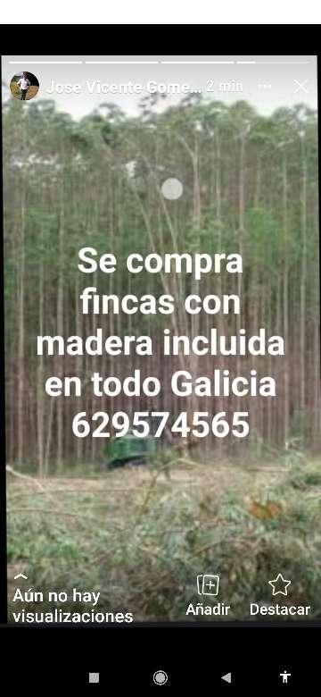 Imagen se compra madera con finca incluida en todo Galicia pago al momento José Manuel 629574565