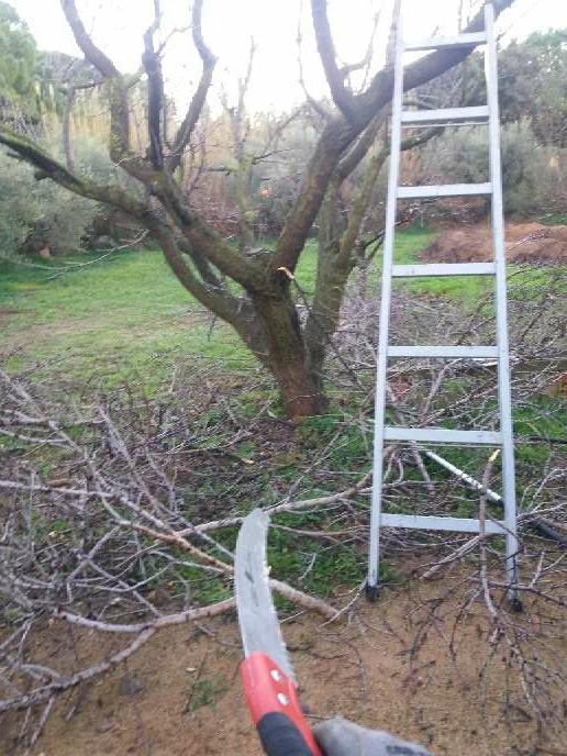 Imagen producto Podar olivos i talla árboles  4