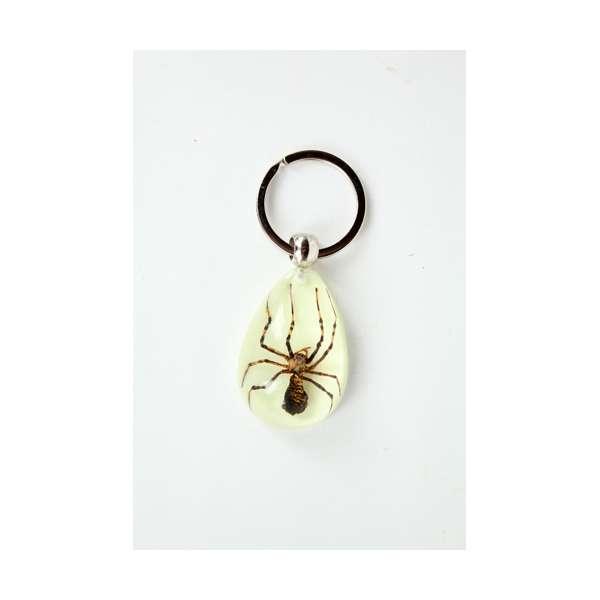 Imagen LLaveros con insectos autenticos de todo el mundo.