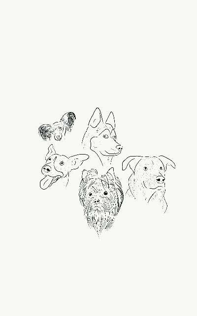 Imagen Retratos lineales de tu mascota