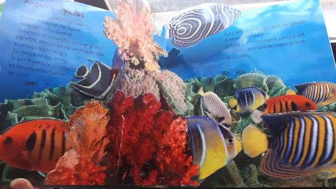 Imagen producto En el océano. Richard Ferguson. 2