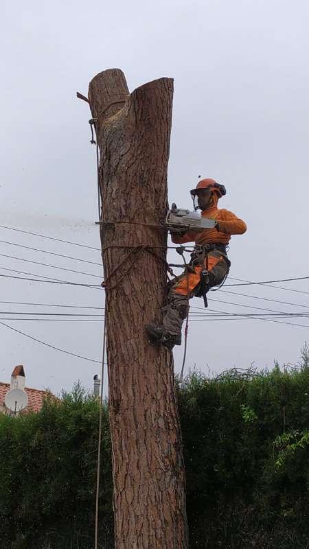 Imagen Tala poda todo tipo de árboles peligrosas limpieza parcelas y palmeras